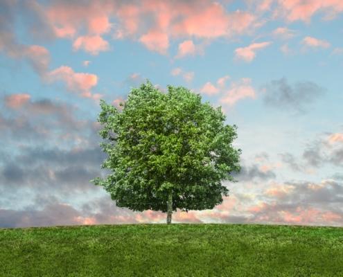 Eco Friendly Gardening Tips MN